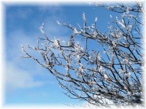 20070114プチ樹氷2□