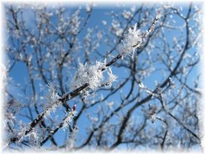 20070114プチ樹氷3□