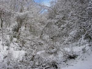 20070203白い森