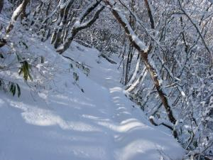 20070203天狗の森へ