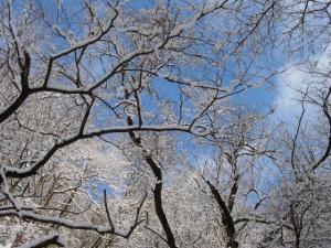 20070203木々の間の青空