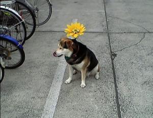 20070227花犬