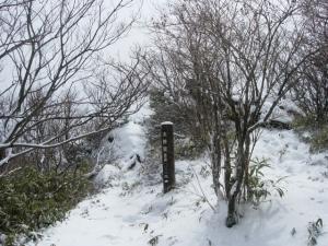 20070311ナギ-下り大神岩
