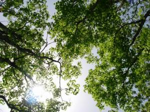 20070527新緑