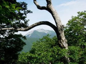 20070617大山を臨む