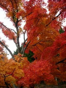 20061126那岐山紅葉