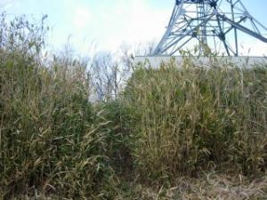 20070211鉄塔発見