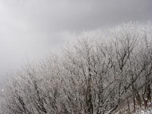 20070311樹氷
