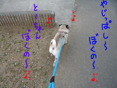 翼 散歩(4)