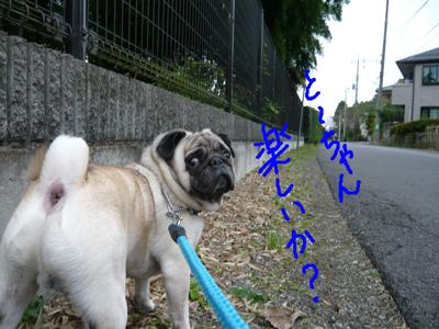 翼 散歩(1)