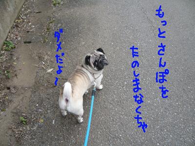 翼 散歩(5)