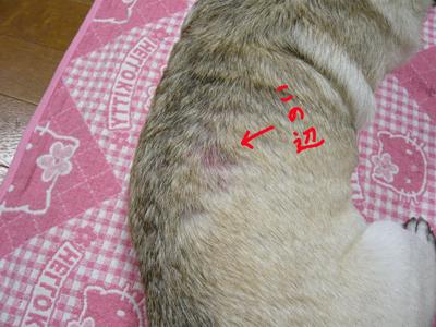 翼の背中の炎症1