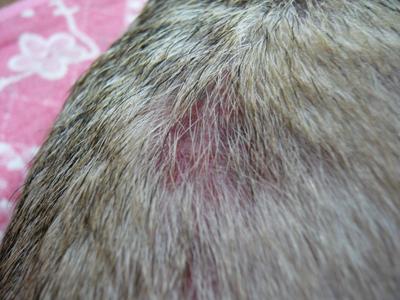 翼の背中の炎症2