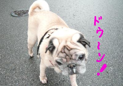 2007年11月11日笑さんぽ4