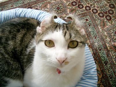 カール猫大ちゃん