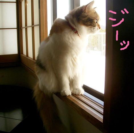 和室窓で待つリン