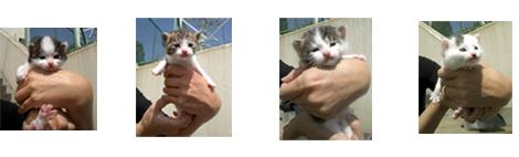 1西谷赤ちゃん猫4匹