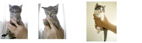 4きじ猫2匹とチャム