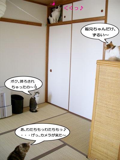 わらわらやじ猫2