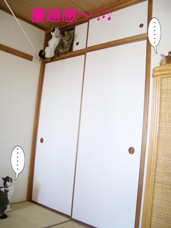 見下ろす福タビ3