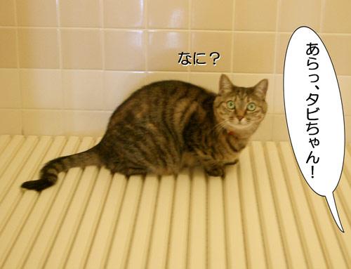 タビお風呂場に1