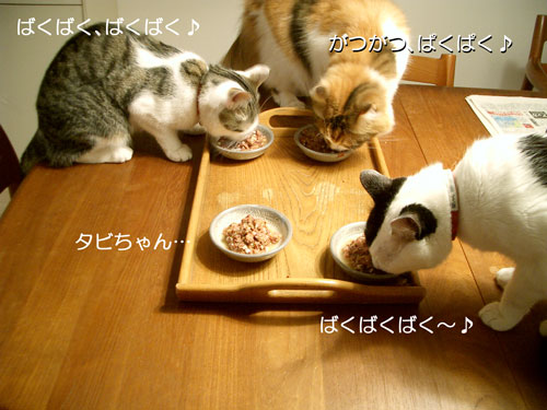 カツオスープでぱくぱく6