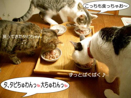 食べてる食べてる7