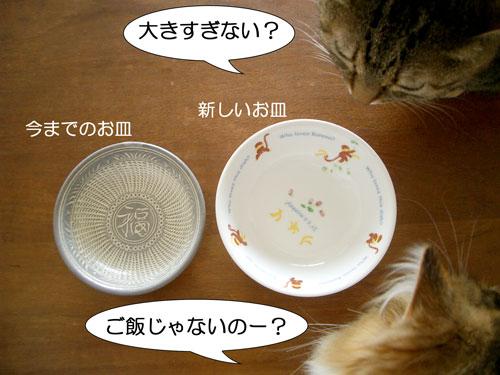 新しいお皿です5