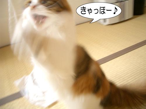 リン参戦8