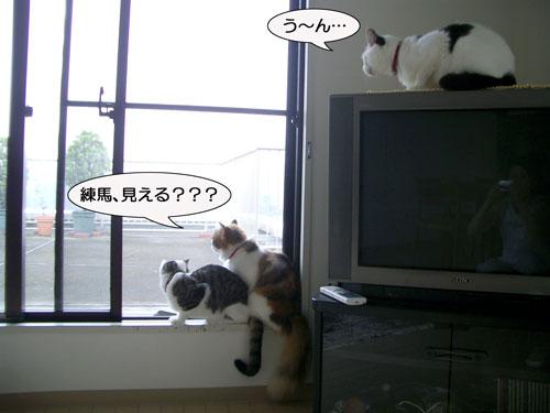 ねりま猫を13