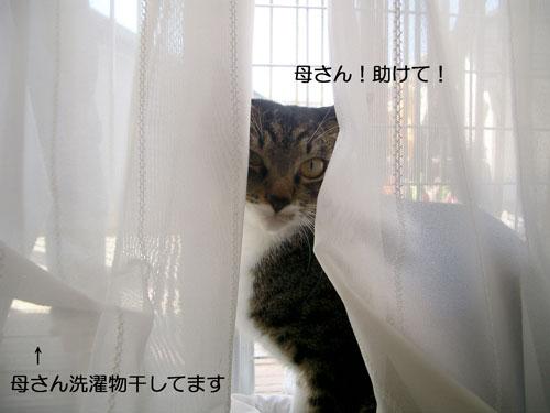 隠れフクさん4