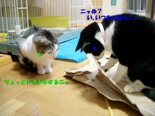 シゲ&マサ君5