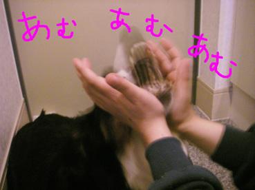 20061105125323.jpg