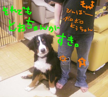 borotou.jpg