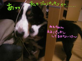 chikan3.jpg