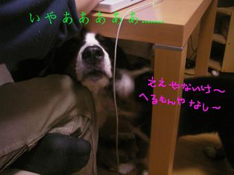 chikan4.jpg