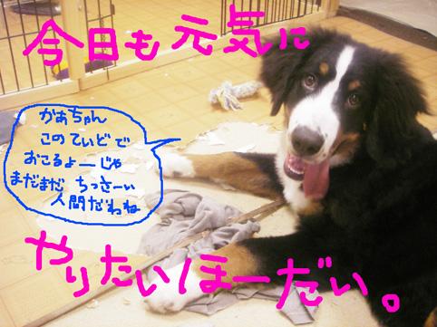 chisai.jpg