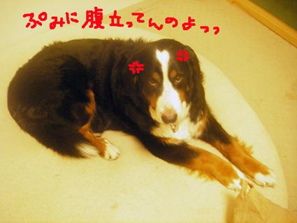 haradachi.jpg