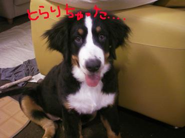 jyaski2.jpg