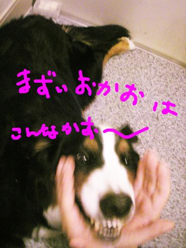 mazuikao.jpg