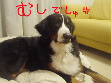 mushideshi.jpg