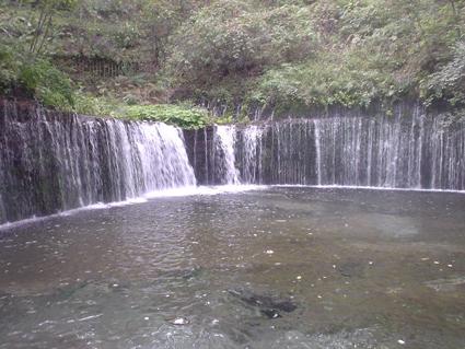 shiraito4.jpg