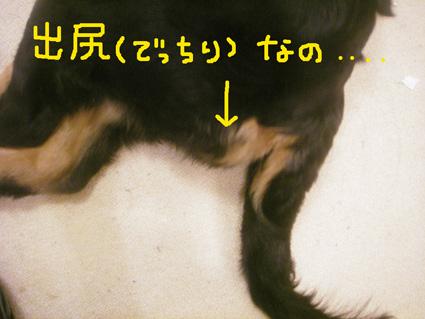 shiri1.jpg