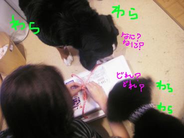 warawara1.jpg