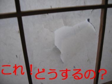 20070316133834.jpg