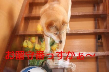 20070517120118.jpg