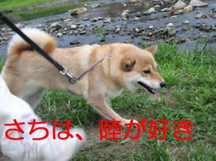 20070811113618.jpg