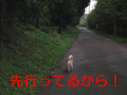 20070911094741.jpg