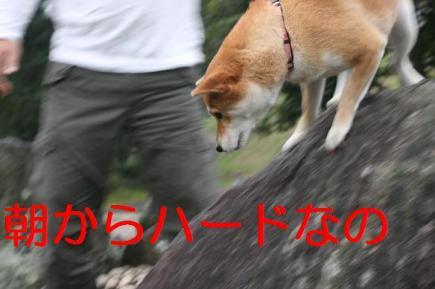20071009110555.jpg