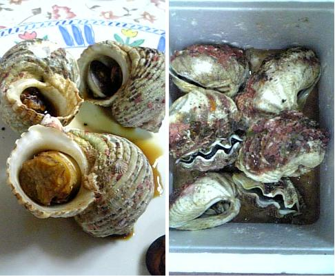 サザエとシャコ貝